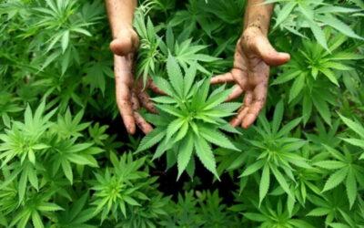 Ломка от марихуаны — 7 симптомов и лечение